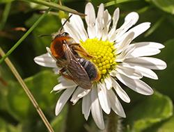 nest met bijen in de grond